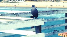 Seagull Perching On Railing At Pier