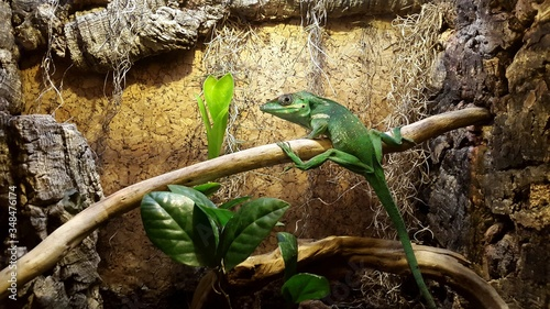 Photo Green Anole On Branch In Zoo