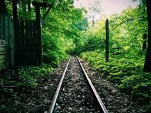 Railroad Tracks Amidst Trees In Field