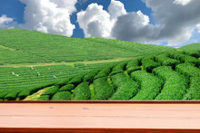 Tea Plantations That Grow Tea ...
