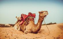 Lompoul Desert Yellow Sand Pho...