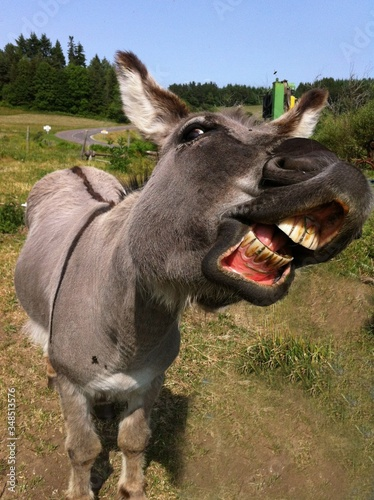 Canvas Print Close-up Of Donkey On Field Against Sky