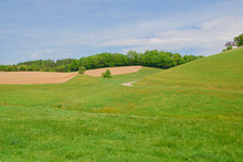 Landscape With Green Grass And...