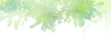 Watercolor With Green Leaves Background, Nature Concept, Vector.