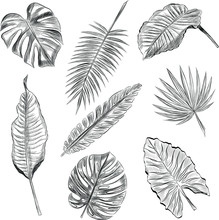 Set Of Palm Leaves Black And White Sketch