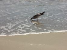 High Angle View Of Seagull Dri...