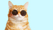 Closeup portrait of funny ginger cat wearing sunglasses isolated on light cyan. Copyspace.