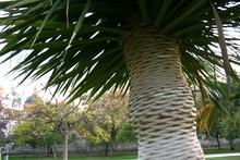 Close-up Of Palm Tree At Park