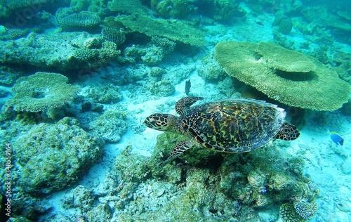 Turtle Swimming In Sea Wallpaper Mural