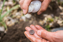 A Male Archaeologist Digger Found An Old Ancient Valuable Coin In The Forest And Washes It With A Spray. A Valuable Find In The Forest