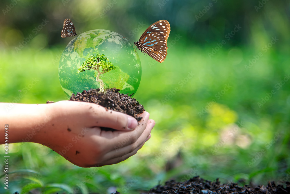 Fototapeta Hands child holding tree with butterfly keep environment on the back soil in the nature park of growth of plant for reduce global warming, green nature background. Ecology and environment concept.