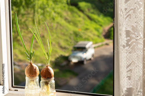 Old onions with green sprouts on a home farm, handmade, onions in a glass jar on a green background, an open window with a view of the forest, the sky