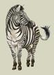 Hand drawn zebra
