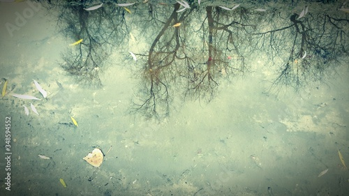 Fotografie, Obraz Reflection Of Trees In Puddle