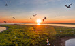 Seagulls fly at sunset, aerial view, white birds, lake and island, beautiful sky