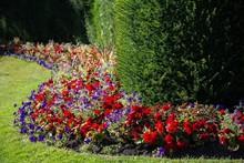Red Flowers Growing In Garden