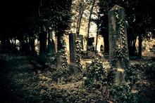 Plants Growing In Graveyard