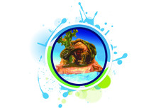 Terrestrial Turtle