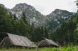 widok z doliny w polskich tatrach. widok na szczyt z doliny