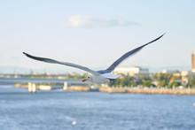 WhiteSeagull Side View_In Flight