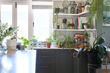 Houseplants In Domestic Kitchen