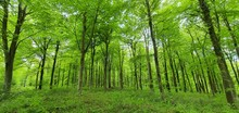 Lush Green English Forest In Summer