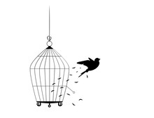 Bird Flying From The Cage, Fly...