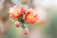 Close Up Of A Cactus Flower