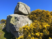 Rock Formations With Yellow Gorse Flowers