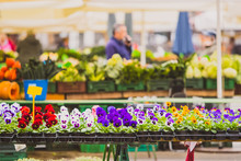 Stalls With Flowers In Pots As...