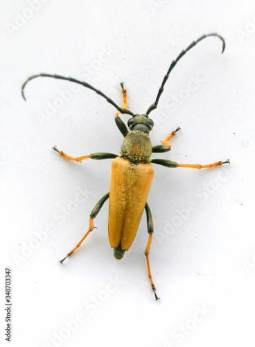 Photo Close-up Of Bug Against White Background