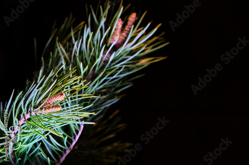branch ate on a black background color low light Canvas Print