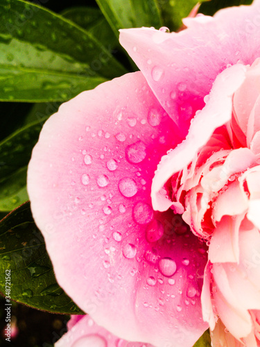 Close-up Of Fresh Pink Flower Outdoors #348721562