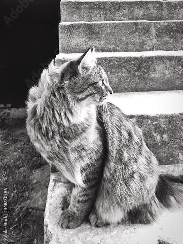 Obraz na płótnie Cat Sitting On Steps