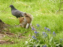 Squirrel And Pigeon Perching On Field