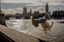 Bird Flying Off Bridge With Bi...