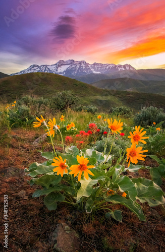 Fotografie, Obraz Vertical wildflower sunset with Mount Timpanogos, Utah, USA.