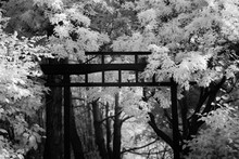 Black And White Archway With T...
