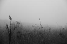Plants Growing On Field In Foggy Weather