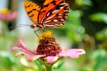 Butterfly On Flowerhead