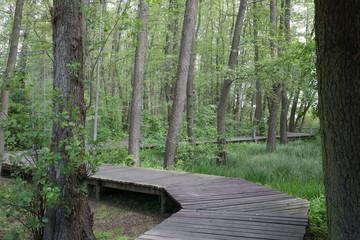 Drewniany pomost