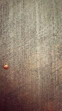 High Angle View Of Ladybug On Wall