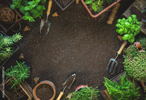 Gardening tools and herbs #348808724