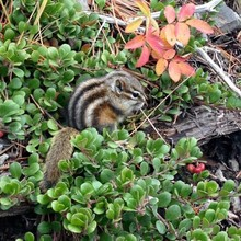 High Angle View Of Chipmunk Amidst Plant On Field