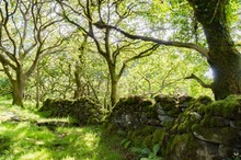 Moss Covered Stone Wall By Trees In Forest