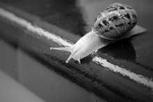 Close-up Of Snail On Wet Retai...