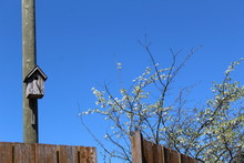An Old Birdhouse On A Post And A Blooming Apple Tree In The Garden Against The Blue Sky