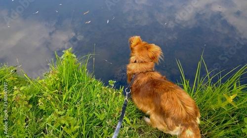 Photo High Angle View Of Dog By Lake