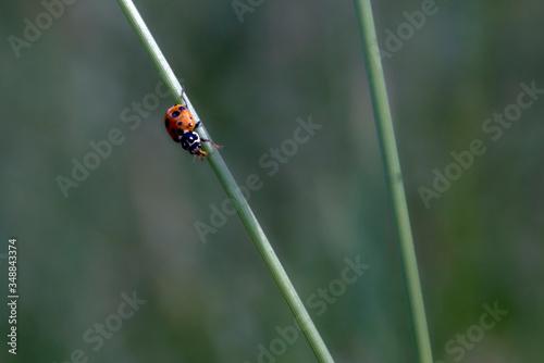 Photo close up of a lady bug