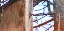 Bird Peeking Through House